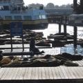 旧金山渔人码头
