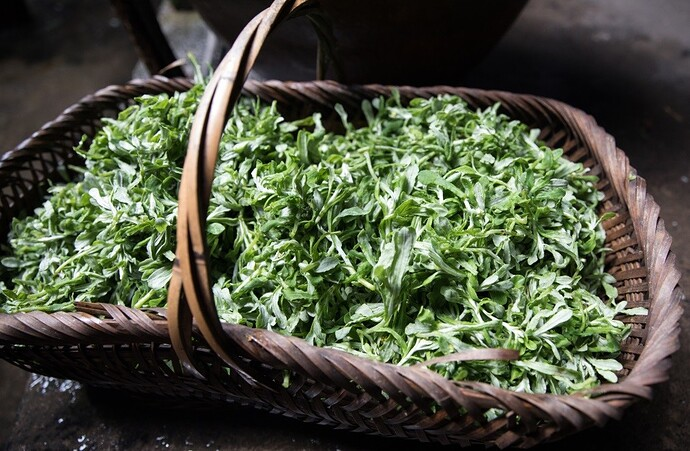 苦菜-竹笋-野菇